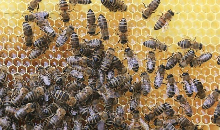 Etkili Zaman Yönetimi Arılar